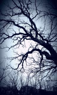 Blue Oak, Karen Huss