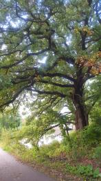 Summer Oak, Karen Huss