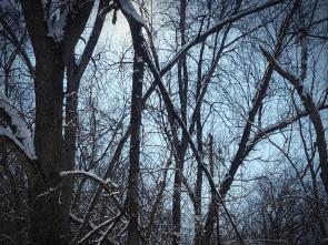 Winter Trees, Karen Huss