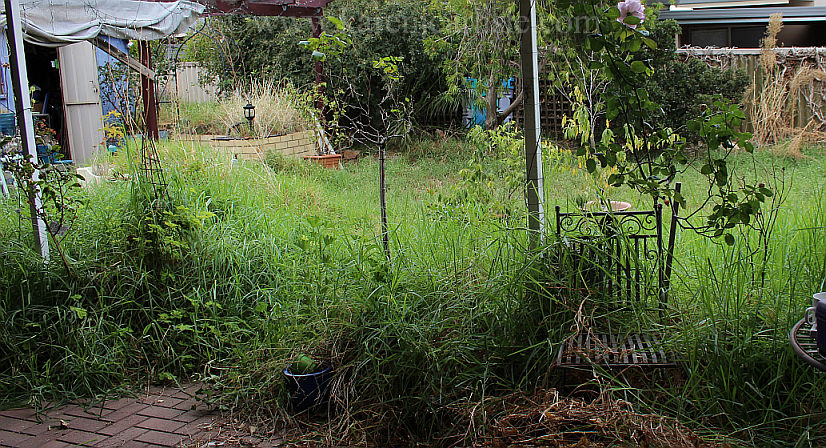 Backyard_before_copyright2016KarenCarlisle