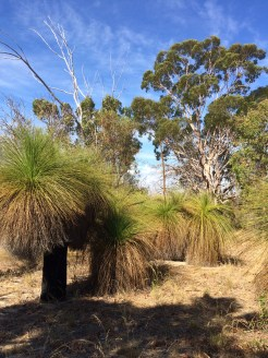 Typical Australia bush.