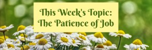Heartwings Front Porch Bible Study Series Week 23 Patience by Karen Jurgens