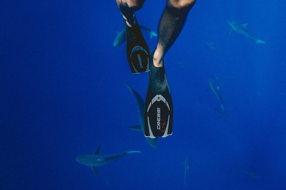 australia-sharks