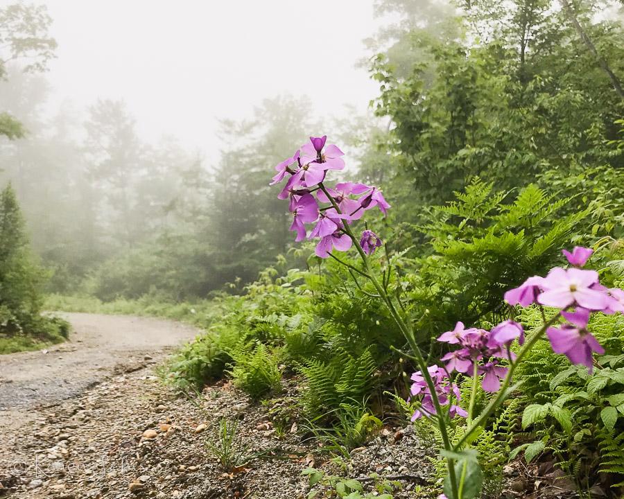 misty mountain path
