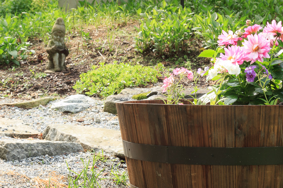 flower garden and gnome