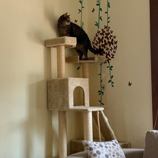 cat on the top of a cat tree