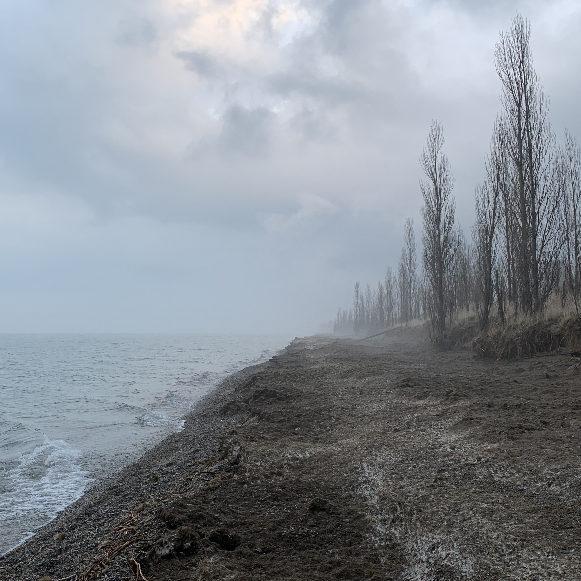 shoreline with mist and trees