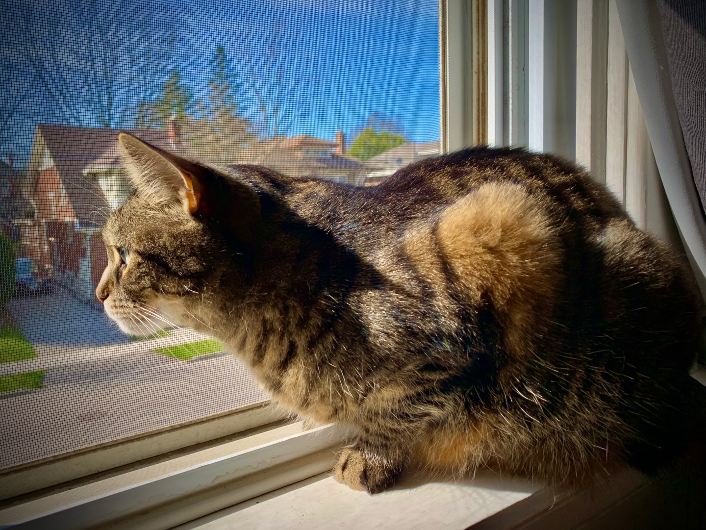 cat looking out window intently