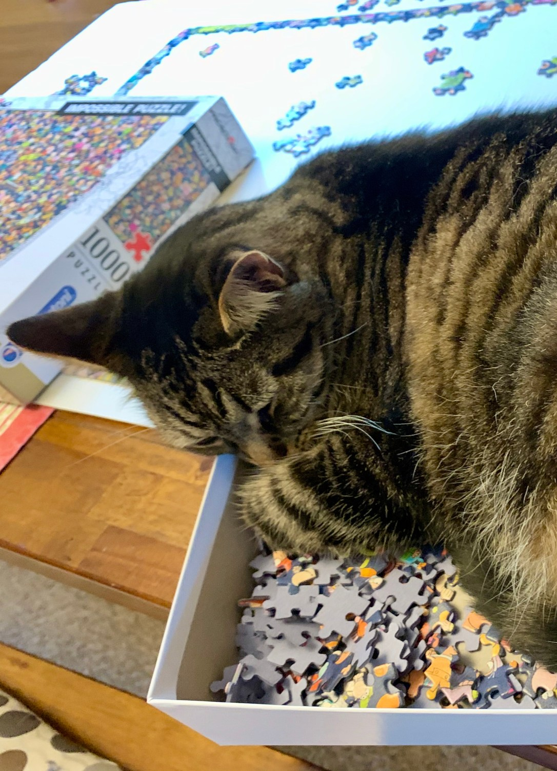 cat sleeping in a box of puzzle pieces