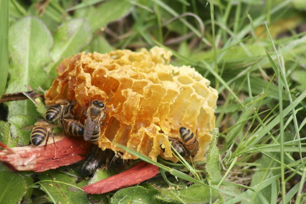 Leftover bees