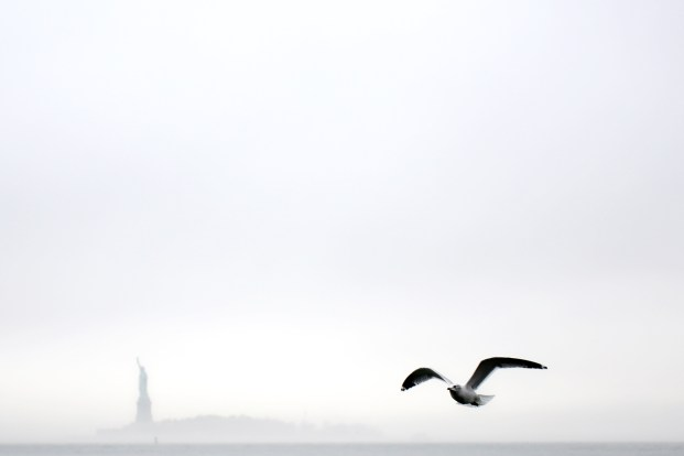 Sea Gull flies in front of the Statue of Liberty