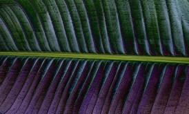 Leaf Paths