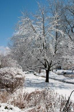 Neighborhood tree ©2014 Karen A Johnson