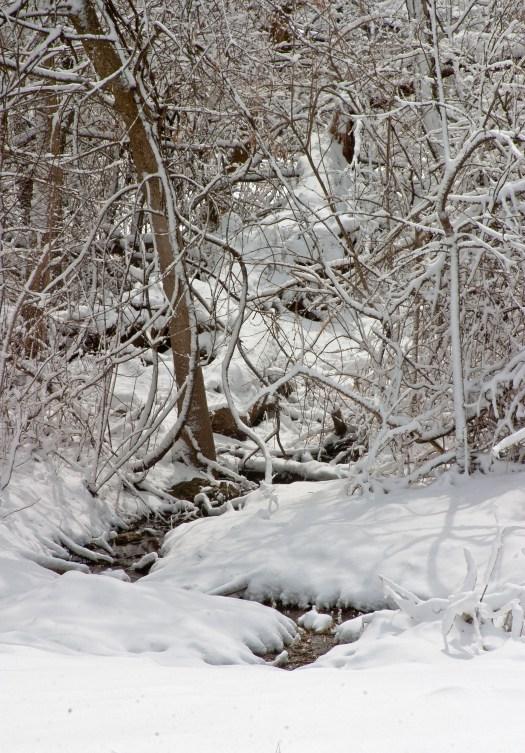 Snowy creek ©2014 Karen A Johnson
