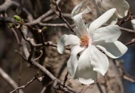 Magnolia © 2014 Karen A Johnson