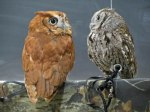 Screech Owls © 2014 Karen A Johnson