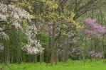 Spring Colors © 2014 Karen A Johnson