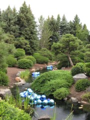 Japanese garden and walla wallas © 2014 Karen A. Johnson