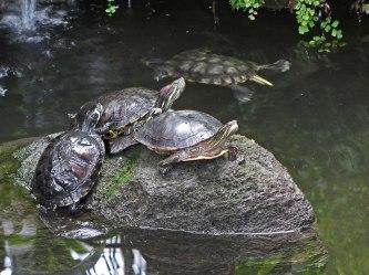 Turtles © 2014 Karen A. Johnson