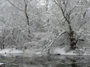 Snowy branches on the river © 2015 Karen A. Johnson