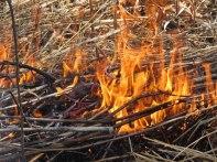 Fire 10 © 2015 Karen A. Johnson