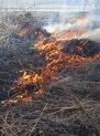 Fire 14 © 2015 Karen A. Johnson