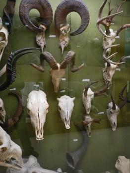Skulls © 2015 Karen A. Johnson