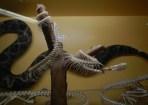 Snakes © 2015 Karen A. Johnson