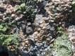 Maine lichens on rock © 2013 Karen A. Johnson