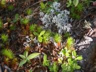 Maine lichens © 2005 Karen A. Johnson