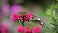 Hummingbird © 2015 Karen A. Johnson