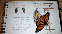 Monarch and sketch © 2015 Karen A. Johnson