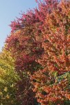 St. James fall colors © 2015 Karen A. Johnson