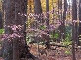 Pink tree © 2015 Karen A. Johnson