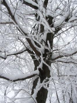 Christmas frost © 2015 Karen A. Johnson