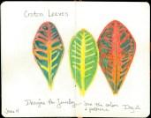 Day 2-Croton leaves © 2016 Karen A. Johnson