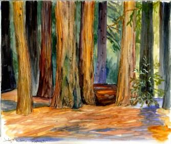 Campus redwoods © 2016 Karen A. Johnson