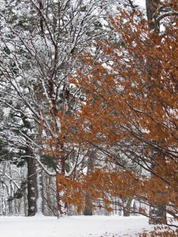 Fall and winter combined © 2016 Karen A. Johnson