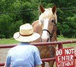 Nancy and the horse © 2017 Karen A Johnson