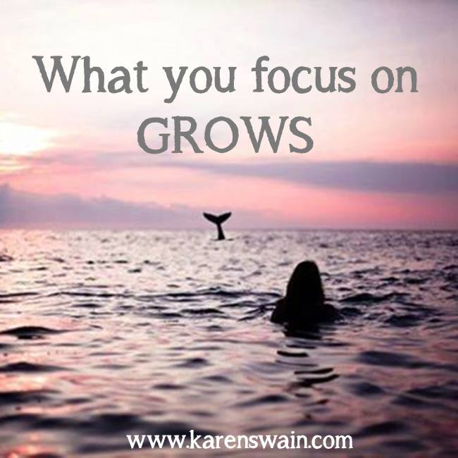 Focus on Grows