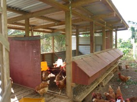 Room for about 100 chickens
