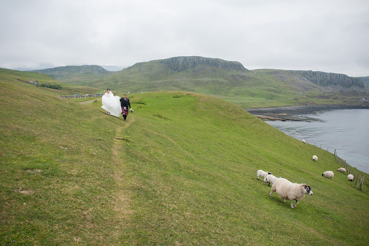 Wedding photo gallery - sheep running away from a bride and groom on a large expanse of grass next to the sea and cliffs