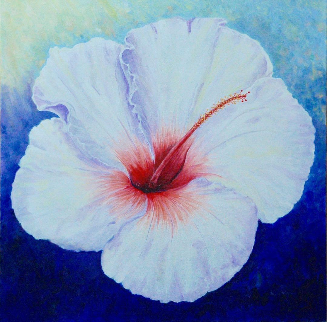 Giant White Hibiscus