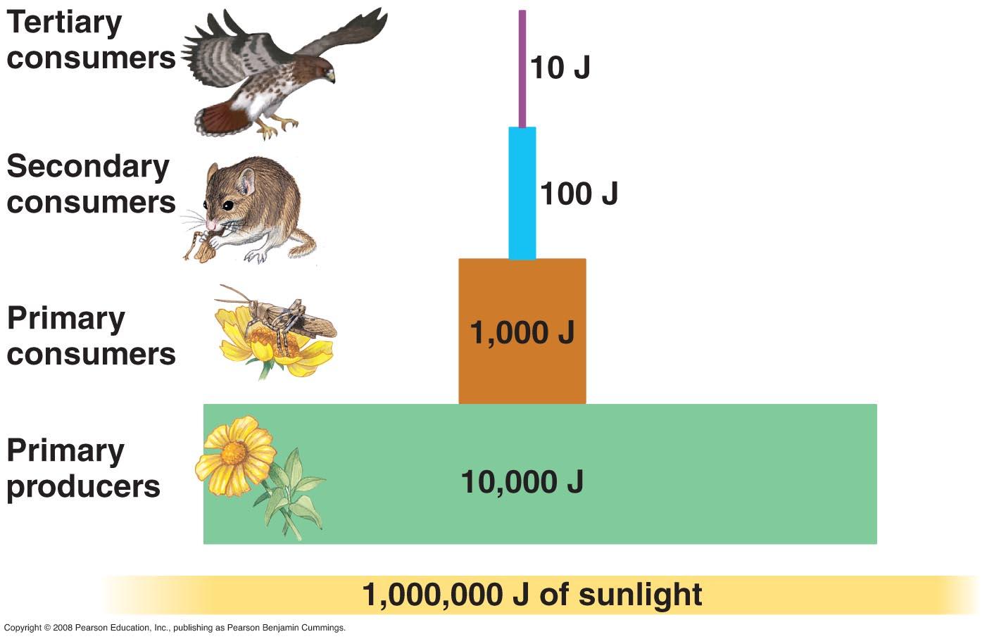 5 1b Energy In Ecosystems