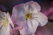 Open Blossom