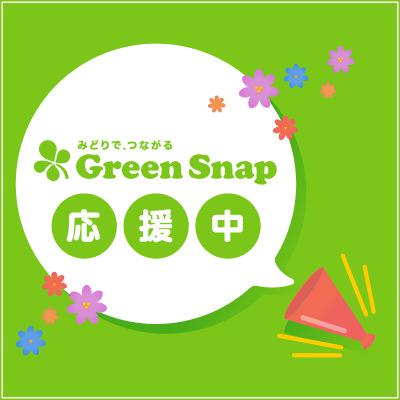 bnr_green_01