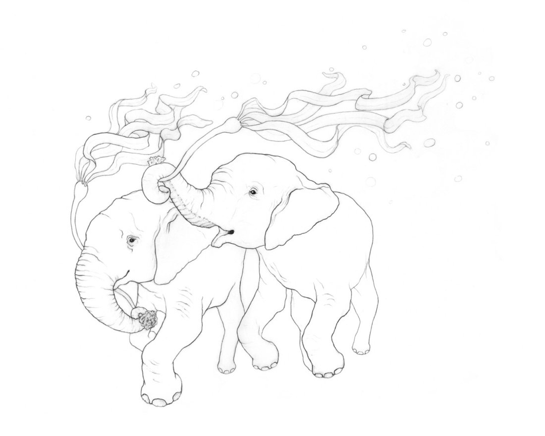Karina Kalvaitis - Animal Drawings - all rights reserved