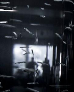 20111 - Reflexions