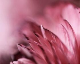 2012 - Rose !
