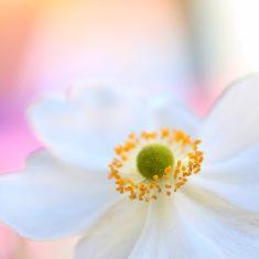 2017 - Fleur blanche